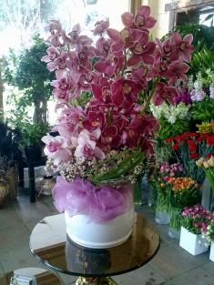 spidyum orkidelerden özel aranjman