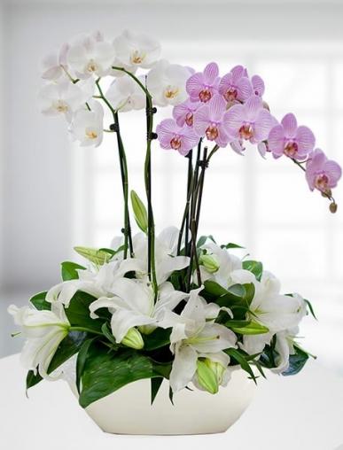 pembe beyaz orkide bahçesi