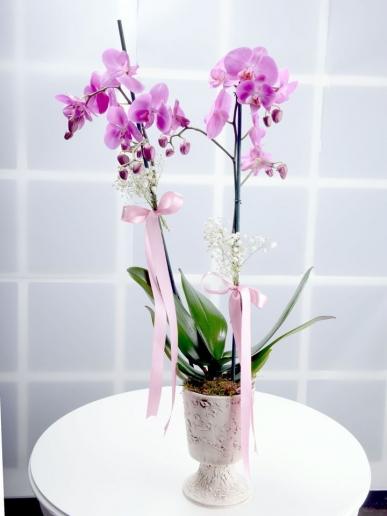 pembe orkide özel anlar