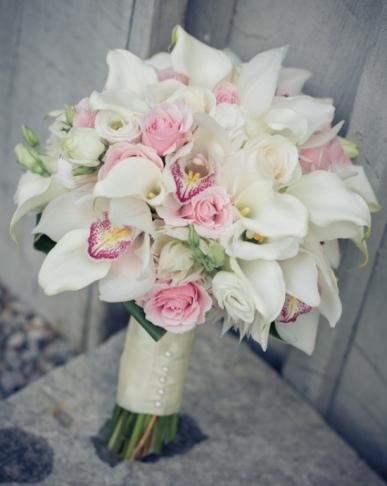 beyaz spidyum orkideler