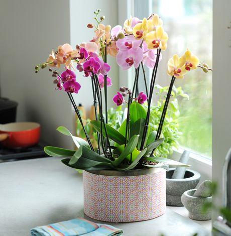 rengarenk orkide bahçesi