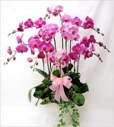 muhteşem pembe orkide bahcesi