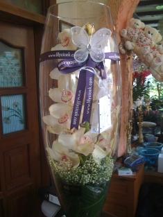 cam vazoda se pidyum orkide