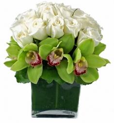 syimbidium orkideler ve beyazın masumiyeti