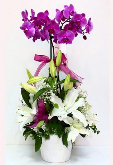 çift dallı pembe orkide ve güller