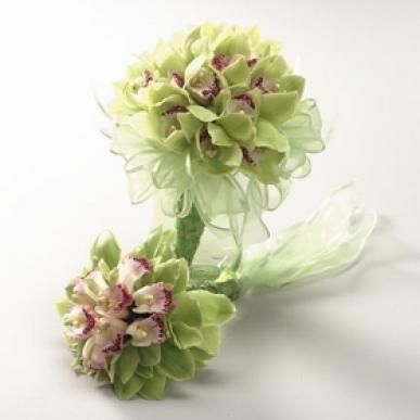 yeşil simbidyum orkide