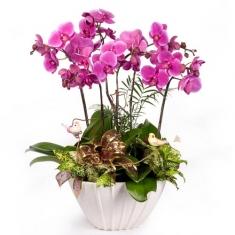 VIP orkide bahçesi