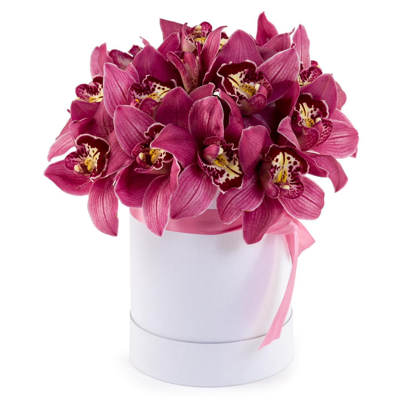 kutuda simbidyum orkideler