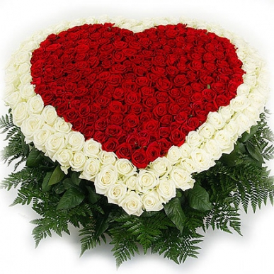 VIP kalp şeklinde kırmızı beyaz güller